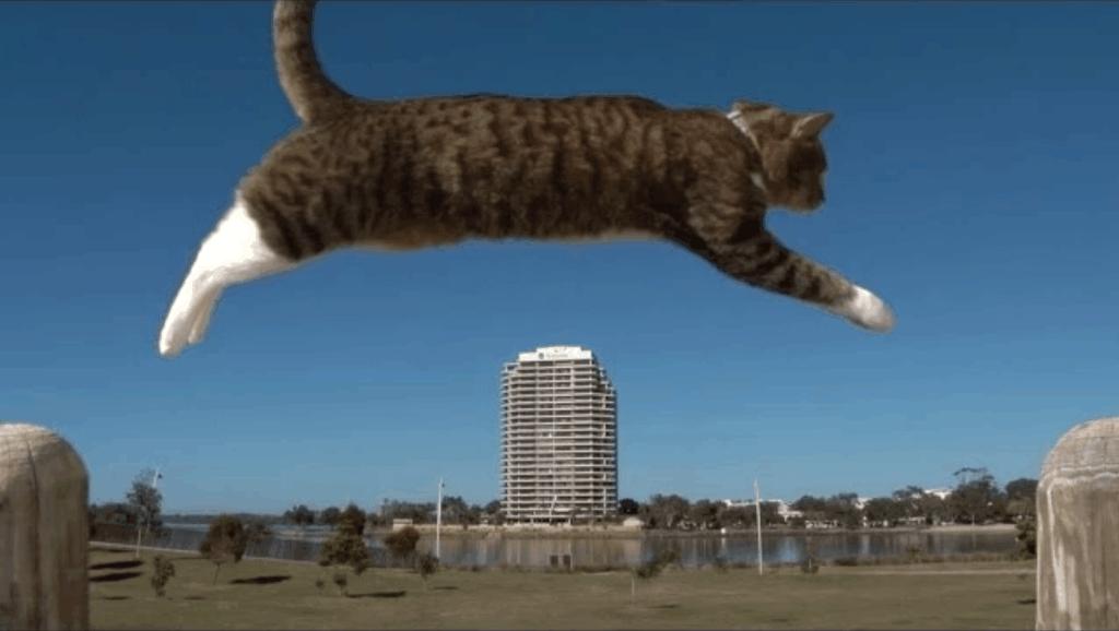 酷跑猫猫,看看有多厉害?