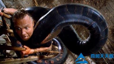 大蛇吃人事件_亚马逊森蚺吃人事件