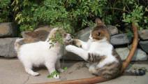 猫狗打架,猫咪的飞毛腿能把狗狗打的怀疑人生