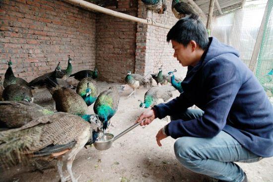 龙马潭区: 特色养殖业 打开农村致富新方向