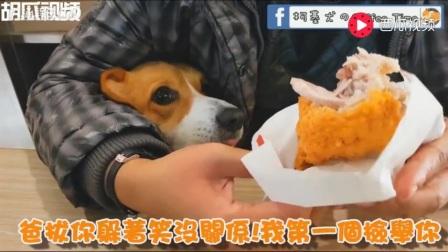 小柯基coffee: 香香酥脆的黄金大鸡腿!麻麻你不可以吃独食啦!