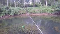 钓鱼: 河边全是水草,一条大鱼钻了出来