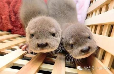 高萌预警! 不输《疯狂动物城》的台湾 10 大动物明星!