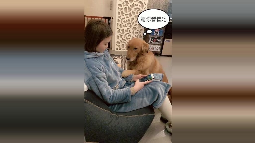 女主人玩游戏上瘾不陪金毛,狗狗上去就是霍霍!镜头记录尴尬一幕!