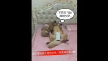 金毛和泰迪睡觉姿势太难看了,女主人直接替他们贴两张卫生纸,这画面太逗了!