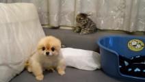 小貓咪偷袭傻P仔,太好笑了吧