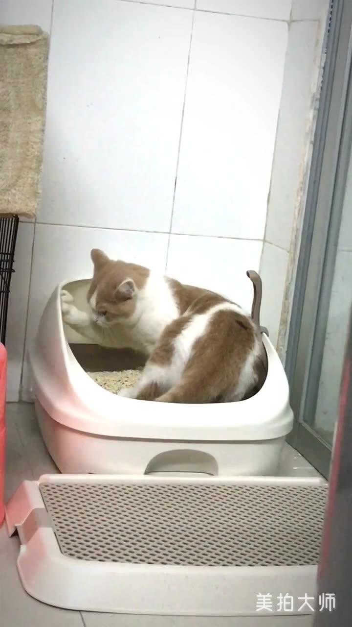 养一只很很很洁癖的猫是一种什么体验。。。?