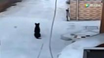 狗狗自家门前蹲着休息 下一秒监控拍下可耻一幕
