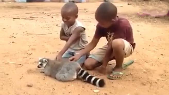 狐猴: 两个小孩快帮我挠挠不要停!