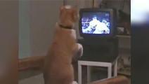 看WWE学拳击的猫猫,学成之后可以战胜汪星人了