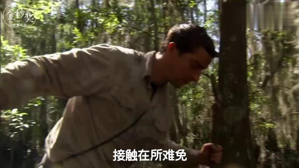 一只出门忘了看黄历的鳄鱼,被贝爷一个人秒杀,提着尾巴扛走了!