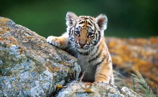 世界最萌动物前十名排行榜