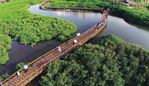 [红树林湿地公园]位于茂名市水东湾滨海区图片图片