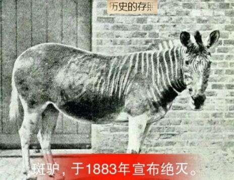 12种已经在地球上消失的动物, 进来看看你认识几种!