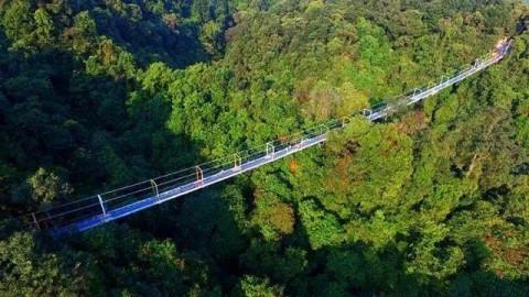 自去年开始,柳州融水双龙沟景区玻璃悬索桥就几度成为热门的旅游景点