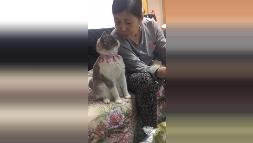 一目宠物站: 家里的猫咪很黏姥姥,配合的很默契