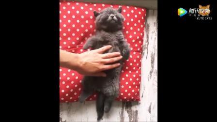 最新搞笑喵星人睡觉汇编,看来猫咪真的是水做的了