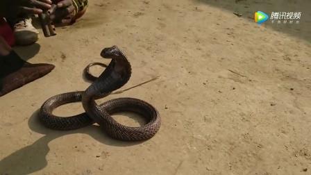 印度街头魔术表演 斗蛇