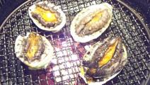 日本料理活烤鲍鱼疯狂的扭动但是很新鲜下田大和馆