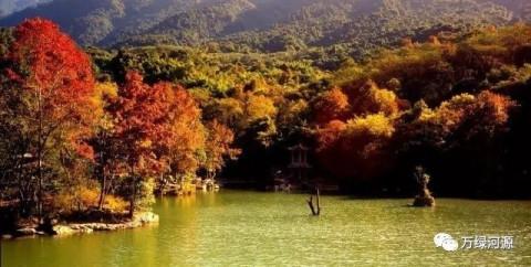 枫树充满着火一般的热情,在秋阳的照耀下,但见满树树叶红遍,若水彩尽