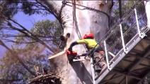 德国机械化有多可怕?砍一颗大树,花5万租台吊车切割!