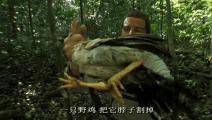 外国的野鸡那么好抓啊,贝爷甩木棍砸到一只大野鸡!