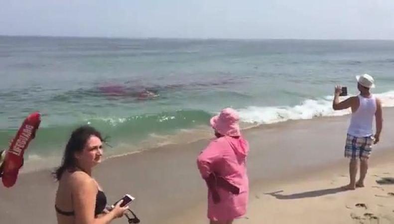 国外海滩很危险,一不小心就会出现这样的场景