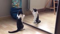 千万别让你家猫照镜子,后果很严重