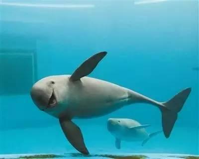 我国水资源丰富,且水质良好,在伊洛瓦底江,若开沿海,伊江三角洲地区