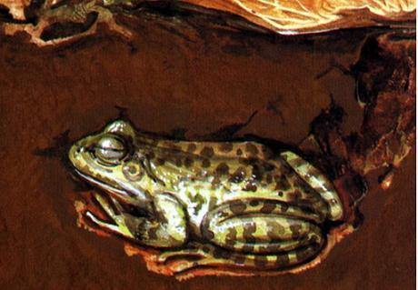 地球动物为什么会冬眠, 科学家揭秘动物冬眠奥秘