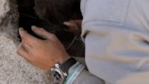 贝爷厉害了啊,在沙漠河床挖水,自制过滤吸管喝水!