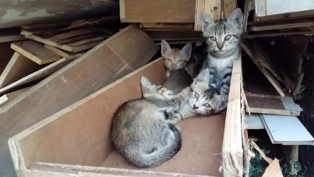 打开 冬日吸猫#喵星人逗比集锦-可爱小猫咪与超萌逗比的喵星人10 萌宠