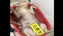 主人带狗狗去洗澡,结果洗到一半就这样了,主人都不好意思看它了