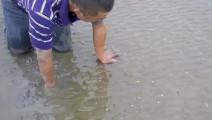 农民大叔海边抓皮皮虾,动作敏捷快速