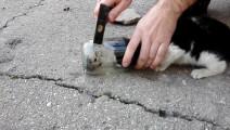 被瓶子困住的猫咪,终于被救了出来!.