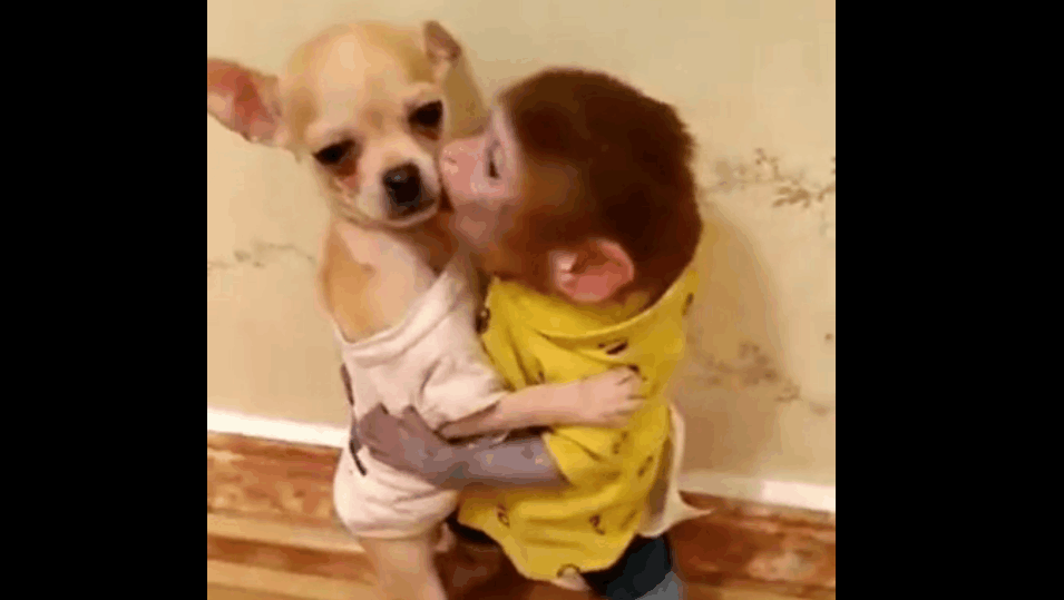 口袋小猴子第一次见狗狗,上去就是一顿猛亲,狗狗心理有阴影了!