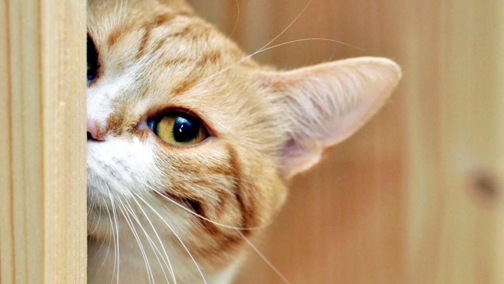 猫是奸臣狗是忠臣?看看这个再下结论吧!看到去世主人的视频猫咪的反应你想不到!
