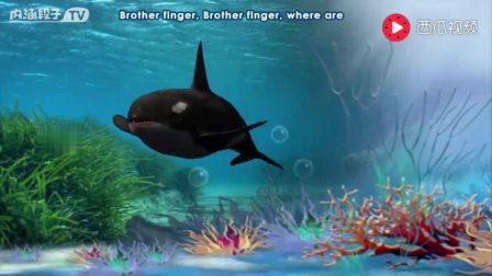 大海水里的动物