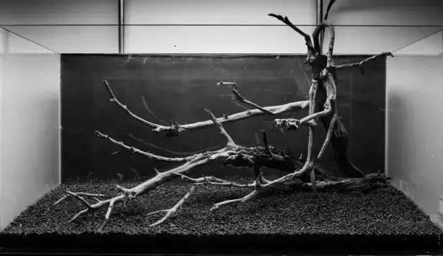 草缸沉木造景教程