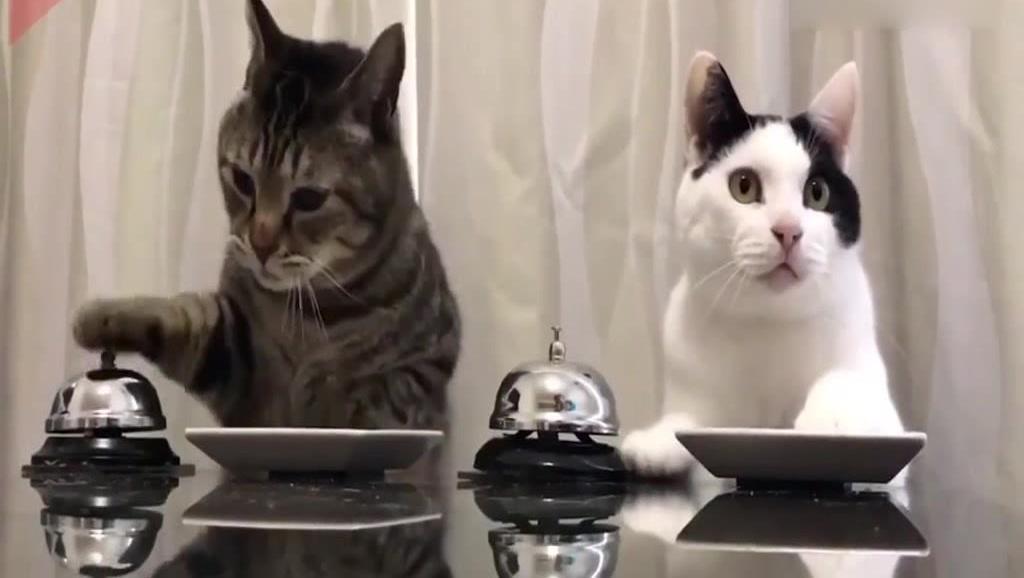 家里养了两只会点餐的猫咪,这智商太高了吧?