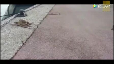 章鱼在岸边散步, 被路过的猫咪发现了, 走慢一步后果不堪设想