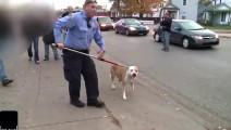 斗牛犬太凶狠攻击其它狗狗,被警察带走的表情太逗了