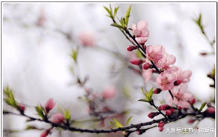 在四月好运不断、桃花都为你们盛开的三生肖