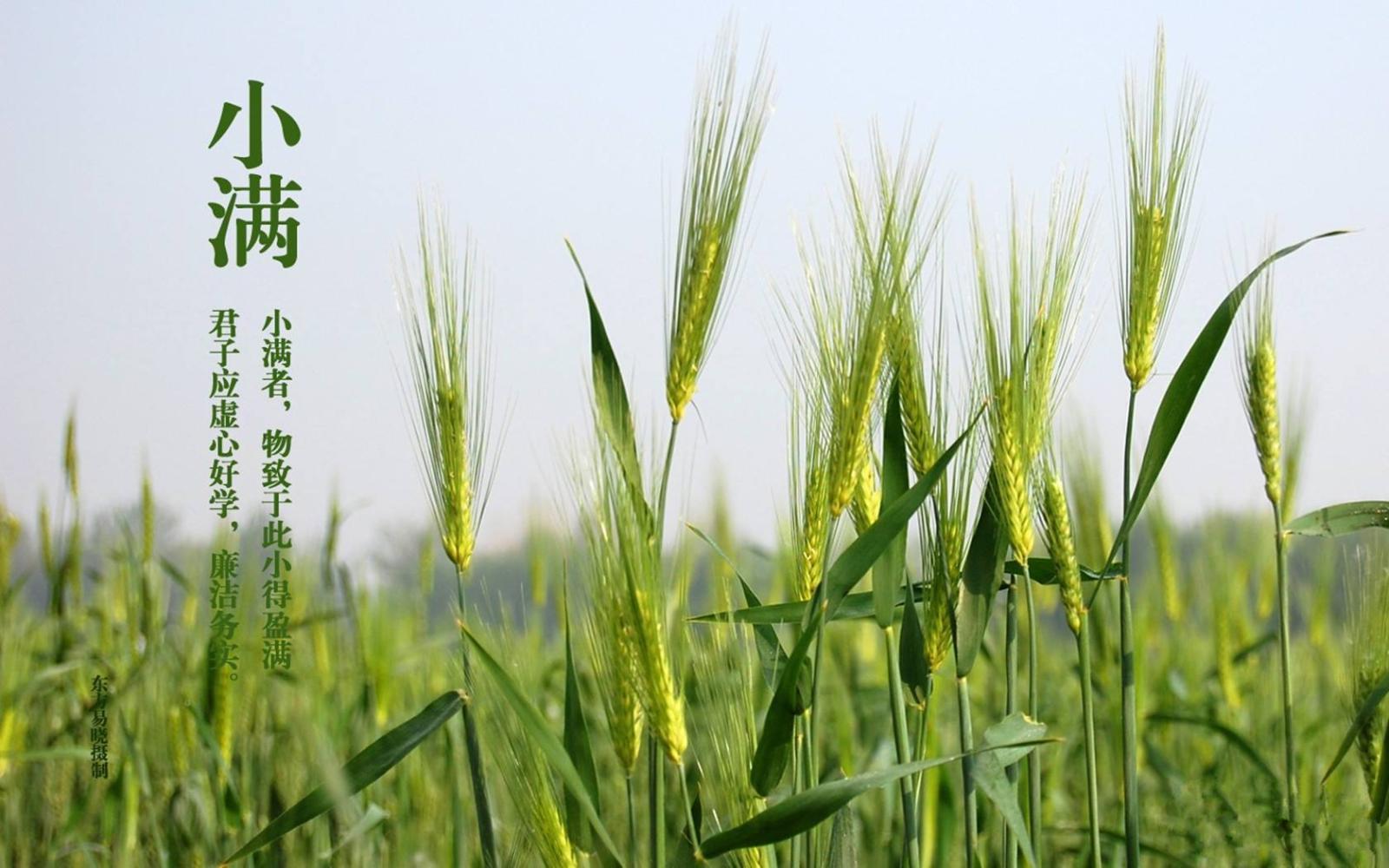 壁纸 草 成片种植 风景 绿色 植物 种植基地 桌面 1600_1000