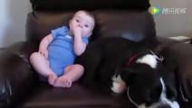 狗狗睡的正香 突然小主人拉臭臭 狗狗的反应让主人大笑!