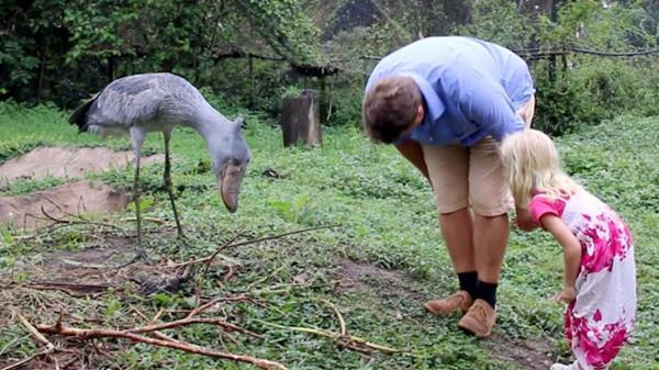 非洲的国宝动物, 够礼貌, 够新奇