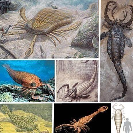 世界十大史前动物!