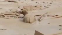 感人一幕!山区泥石流发生,大水牛在坑里救出被困儿童