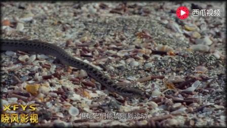 蜥蜴宝宝刚出生就遭遇十面埋伏,上演绝地大逃亡,堪比好莱坞大片