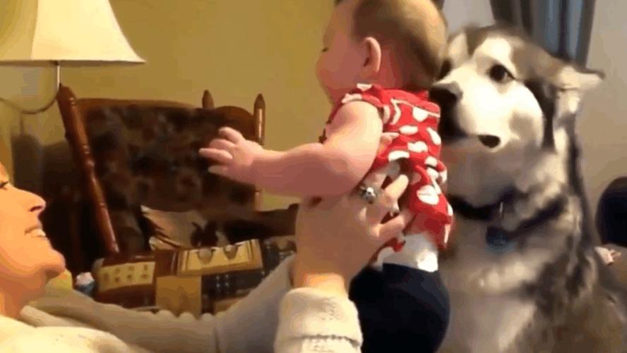 妈妈出门把宝宝留在家里让狗狗看护,回来后的场景既温馨又感人!